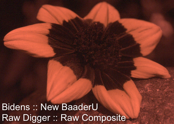 Attached Image: bidens_uvBaader_sun_20110603wf_20193rawComp.jpg
