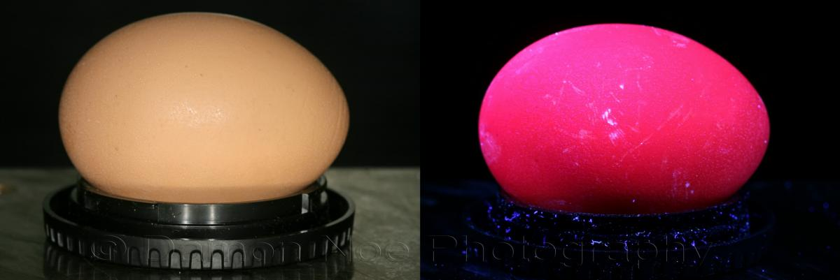 Attached Image: Whole Egg©DNoe_resize.jpg